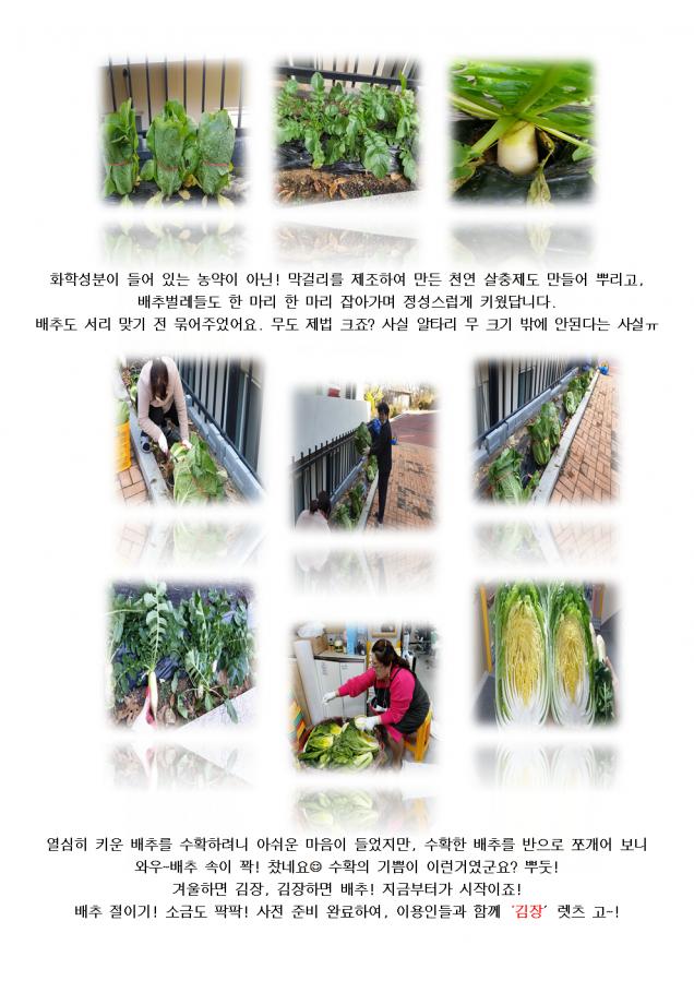 """""""성요셉 텃밭"""" 가꾸기 배추 수확(9번지이야기)002.png"""